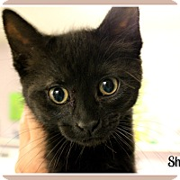Adopt A Pet :: Shania - New Richmond,, WI