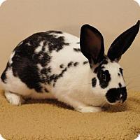 Adopt A Pet :: Sunny - Bellingham, WA