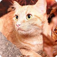 Adopt A Pet :: Jack Jack - Pegram, TN