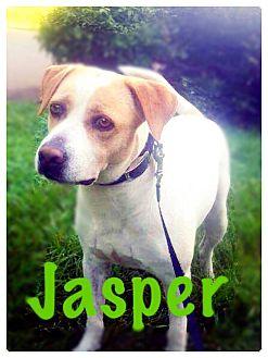 Labrador Retriever Mix Dog for adoption in Greensboro, North Carolina - Jasper
