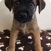 Adopt A Pet :: ADOPTED!!!   Hollyhock - Gahanna, OH