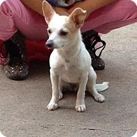 Adopt A Pet :: Lily - Manhattan, NY