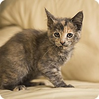 Adopt A Pet :: Cloud - Manhattan, KS