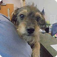 Adopt A Pet :: GRIZZ - Lacombe, LA