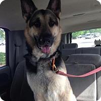 Adopt A Pet :: Zenith - Morrisville, NC