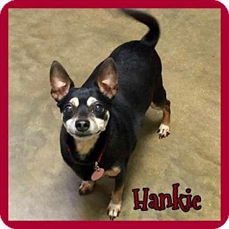 Miniature Pinscher Dog for adoption in Jasper, Indiana - Hanky