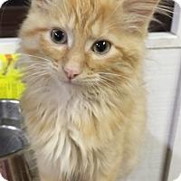 Adopt A Pet :: Bones - Covington, KY