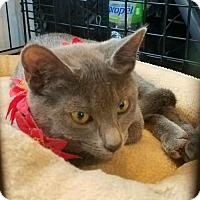 Adopt A Pet :: Olivia - Oakhurst, NJ