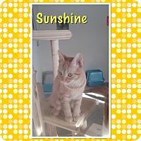 Adopt A Pet :: Sunshine - Cedar Springs, MI