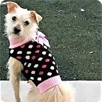Adopt A Pet :: Joy - Austin, TX