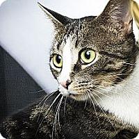 Adopt A Pet :: Cass - Sterling Heights, MI