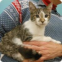 Adopt A Pet :: Houdini - Reston, VA