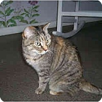 Adopt A Pet :: Antigone - Scottsdale, AZ