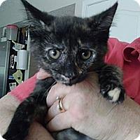 Adopt A Pet :: Jade - Union, KY