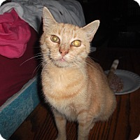 Adopt A Pet :: Honey - Frederick, MD