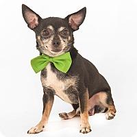 Adopt A Pet :: Joey - geneva, FL