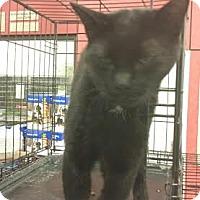 Adopt A Pet :: Tails - Columbus, OH