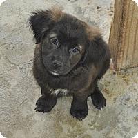 Adopt A Pet :: Cheyenne Adoption Pending - East Hartford, CT