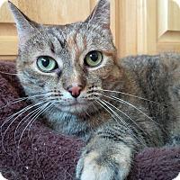 Adopt A Pet :: Tara - Staten Island, NY