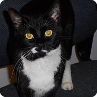 Adopt A Pet :: Sophia - Wamego, KS