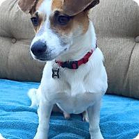Adopt A Pet :: Miso - San Francisco, CA