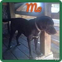 Adopt A Pet :: Mo meet me 4/15 - Manchester, CT