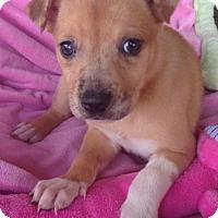 Adopt A Pet :: Ava - Louisville, KY