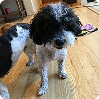 Adopt A Pet :: China - Tumwater, WA