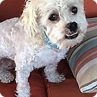 Adopt A Pet :: Walter - San Juan Capistrano, CA