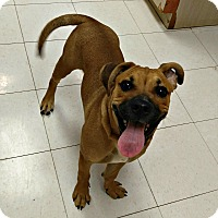 Adopt A Pet :: 1-3 Marvin - Triadelphia, WV