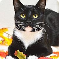 Adopt A Pet :: Polo - Dublin, CA