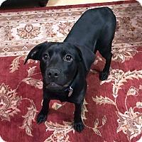 Adopt A Pet :: Delilah - Nashville, TN