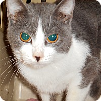 Adopt A Pet :: Misty - Chattanooga, TN