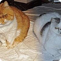 Adopt A Pet :: Chester and Raider - Davis, CA