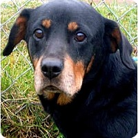 Adopt A Pet :: BETTINA - Wakefield, RI