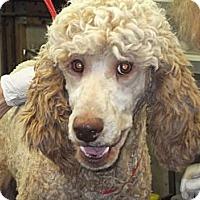 Adopt A Pet :: Savannah ADOPTED! - moscow mills, MO