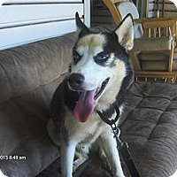 Adopt A Pet :: Bandit - Orange Park, FL