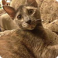 Adopt A Pet :: Saffron - St. Louis, MO