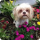 Adopt A Pet :: DWEEZIL