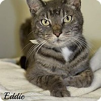 Adopt A Pet :: Eddie - Dover, OH