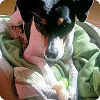Adopt A Pet :: Charlie - Berkeley, CA