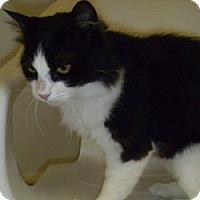 Adopt A Pet :: Lancelot - Hamburg, NY