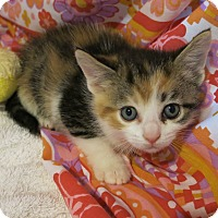 Adopt A Pet :: Paisley - Geneseo, IL