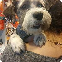 Adopt A Pet :: Miles - Long Beach, NY