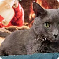 Adopt A Pet :: KABOTA - New Cumberland, WV