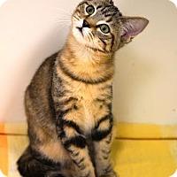 Adopt A Pet :: Louise - DFW Metroplex, TX