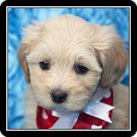 Adopt A Pet :: Amy - Costa Mesa, CA