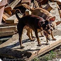 Adopt A Pet :: Mammas and Honey - Englewood, CO