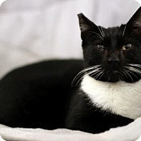 Adopt A Pet :: Marie (CP) - Studio City, CA