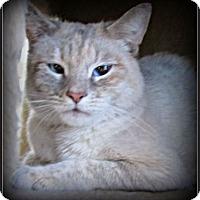 Adopt A Pet :: Party Girl - Gilbert, AZ